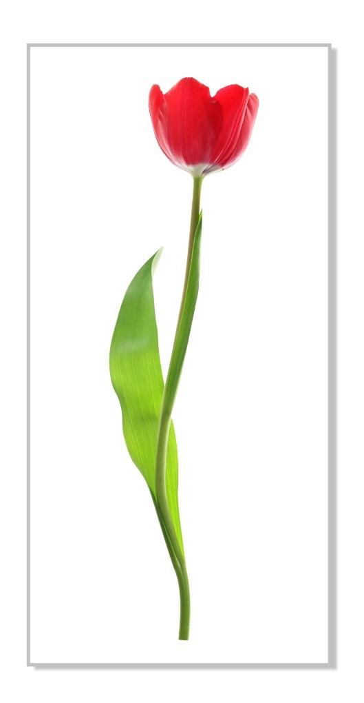 foto de Kolorowa naklejka dekoracyjna Tulipan 8 :: Naklejkolandia